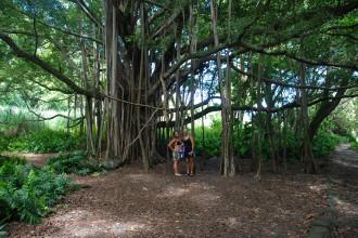Hawaii Landscape (12 of 13)